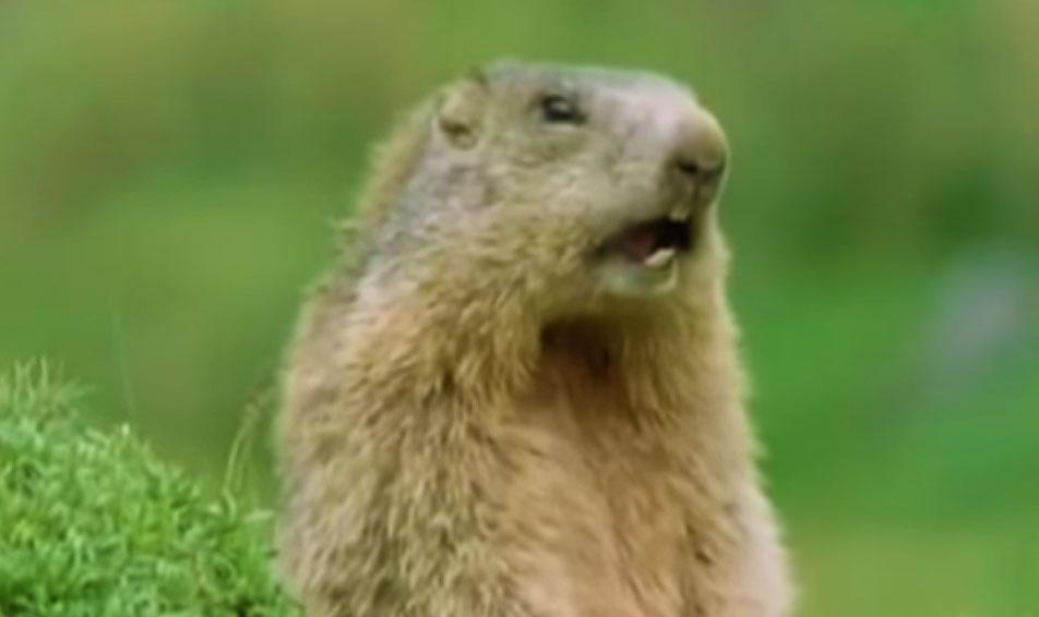 morsomt-dyrevideo